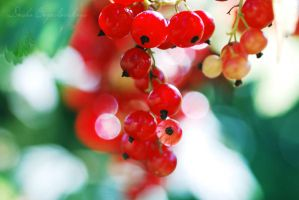 currants... by TheRedGirl
