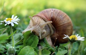 Snail on a meadow by SvitakovaEva
