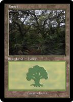 Magic Forest Cumberland Island Photo Card III by lizking10152011