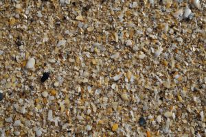 Sand and Grit - HB593200 by hb593200