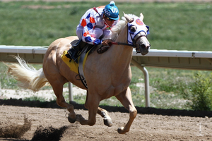 Palomino Racehorse by 1pen