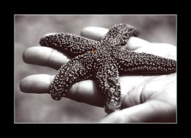 hold the starfish by vinitlee