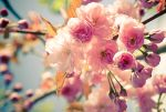 Spring pinks by bexa
