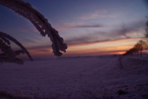 Frozen morning glory by asweetshadow