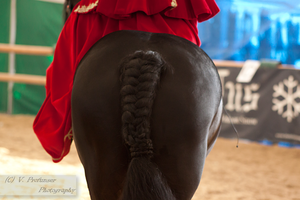 Sidesaddle Friesian_12 by CalyHoney