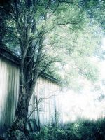 19.8.2010: From under the Tree by Suensyan