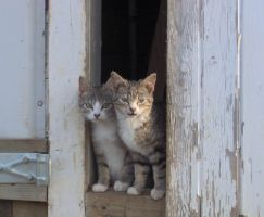 .Kittens. by Dumbkey