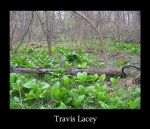 the rabbits grove by RavenseyeTravisLacey