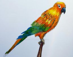 Sun Conure by ZoeSotet
