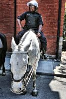 Toronto's Finest: White Pony by basseca