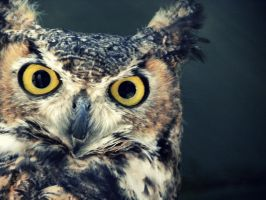 in the owls eyes by h20baby93