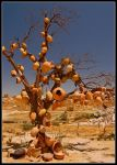 tree of pottery by swingdancer