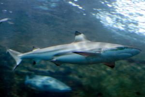 """""""Shark Tale"""" by Shooter1970"""