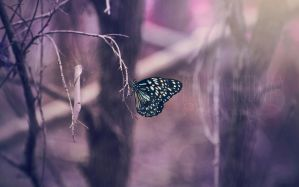 Butterfly by melinahollway
