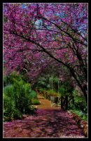 Spring in Araluen by tabbie