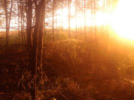 The sun shining in the forest. by d4ydream
