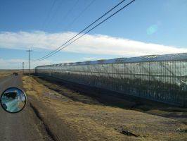 TX Greenhouses 1373 by archambers