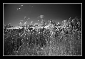 wind in the reeds by zeyus