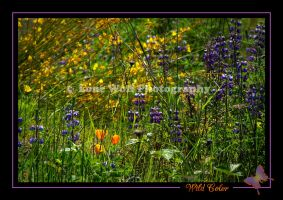 Wild Color by LoneWolfPhotography