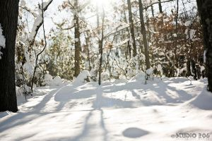 Trees and snow fall by PhotographybyVictor