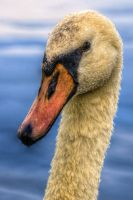 The Swans Head by teslaextreme