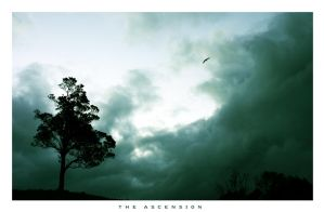 The Ascension by Alremo