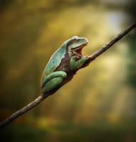 Enter the nature! #1 Frog by Leifart
