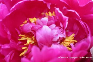 PEONY BRIGHT by GeaAusten