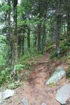 Forest Path by CompassLogicStock