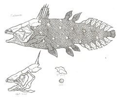 Coelacanth by KitWhitham