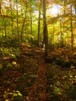 Maine Fall 5 by bleu-claire-stock