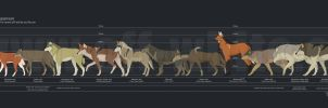 wolf species size comparison by vesner