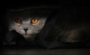 Hide and Seek by CatCleopatra