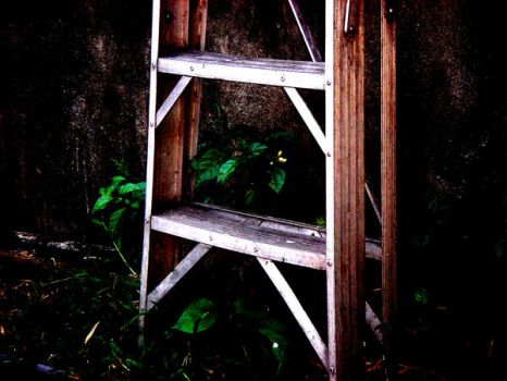 ladder plants by unknowngal2000