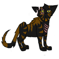 COTN Tigershadow -for collab- by MysteryKittenThe1st