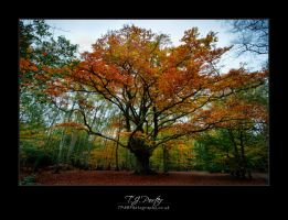 Epping Forest Colours - III by lemondog