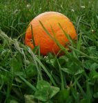 Teh Orange of a Fall by NamibianCAMEL