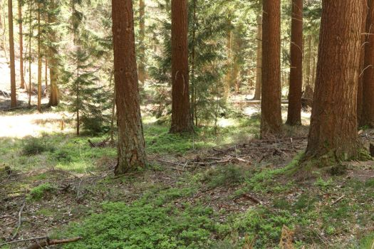 Palatinate Forest Stock 87 by Malleni-Stock