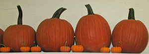 Pumpkins on a Shelf by WDWParksGal-Stock