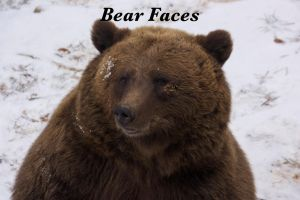 bear faces by bookscorpion