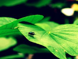 Fly On A Leaf by milesgore