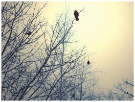 Crows by Bouffe