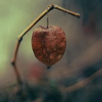 autumn remainders II by innerlands