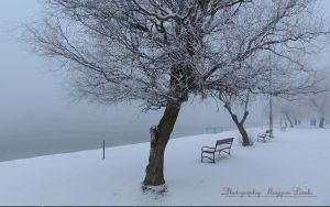 Winter in Hungary.2013. by magyarilaszlo