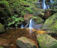 Beauty in Nature by FireflyPhotosAust