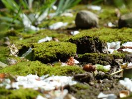 Mounds of Moss by AtomicBrownie