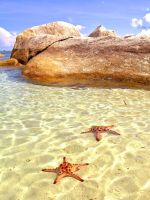 starfishes by cacsb911
