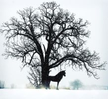 Winter Friesian by LarissaAllen