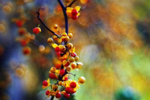 Fall Colors by Justine1985