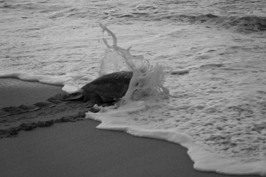 turtle_back_to_ocean by simo2409